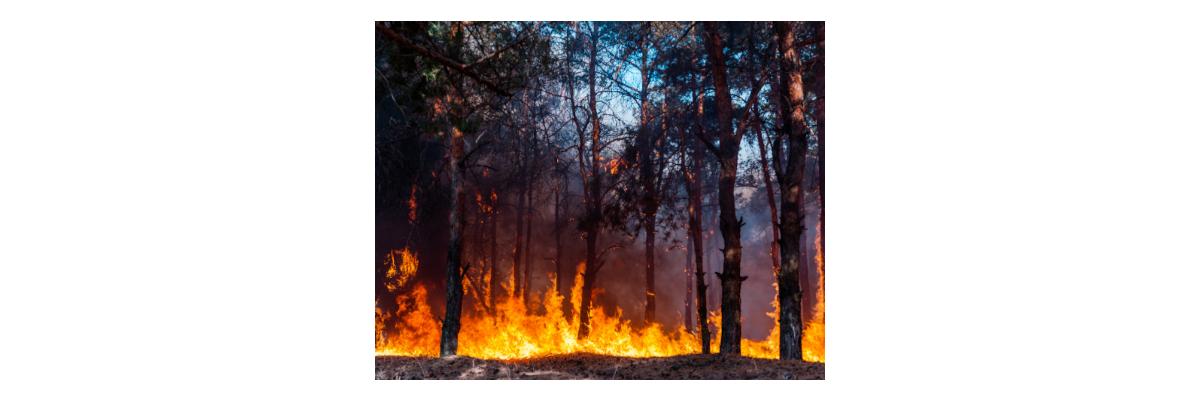 Kork - natürlicher Schutz vor Waldbränden - Kork - natürlicher Schutz vor Waldbränden
